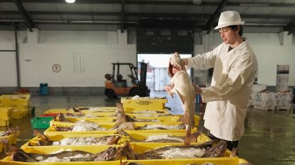 A worker sorting fish in a warehouse