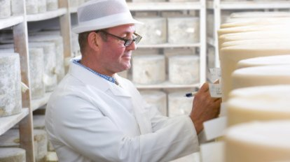 Photograph of a worker inspecting wheels of cheese