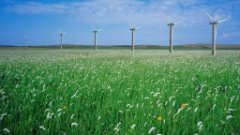 Row of windmills in a field