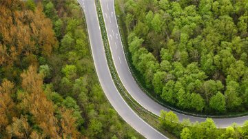Road diverging through a forest