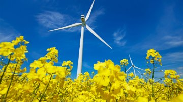 Wind turbine in a field of flowers
