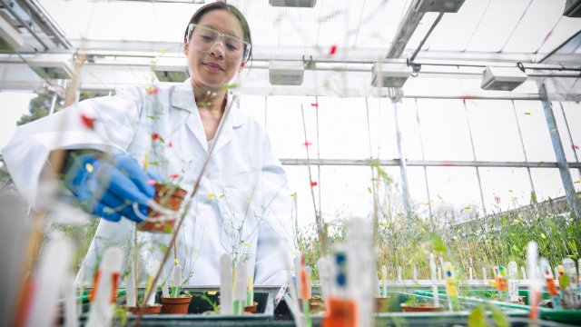 Scientist growing plants in a bio-lab
