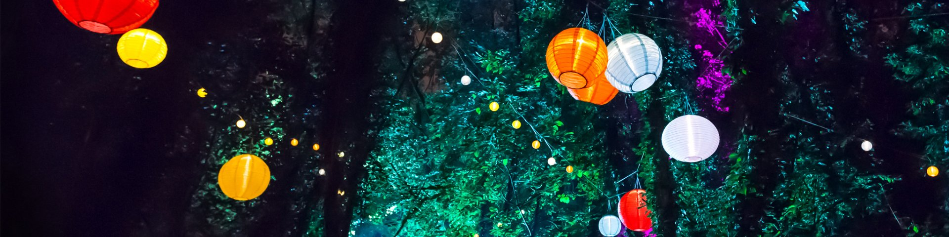 Lanterns strung from trees at a nighttime event