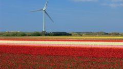 wind turbine with red flowers