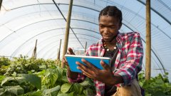 Young man checking tablet information in greenhouse